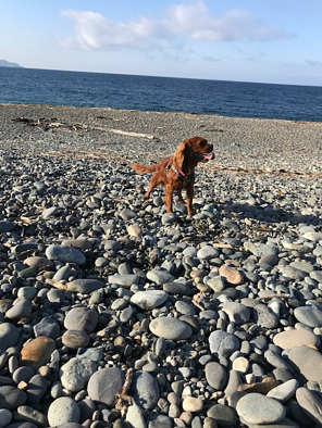 在宅勤務,海,犬,散歩